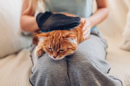 ブラッシングを受ける猫