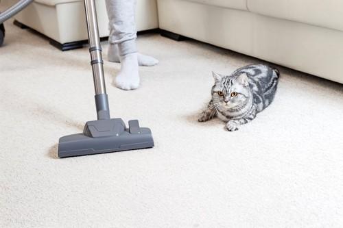 掃除機をかける飼い主とそばにいる猫