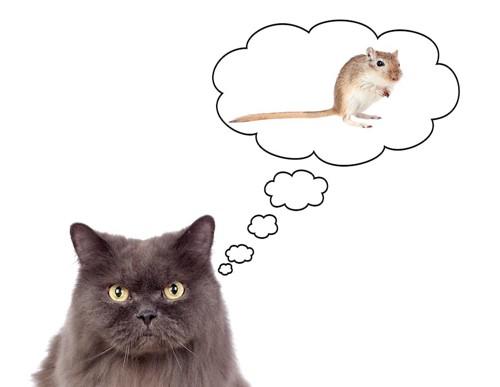 ネズミを想像している猫