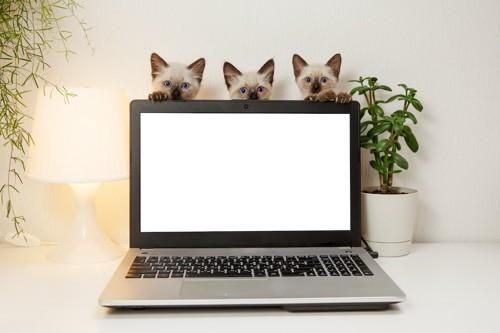 パソコンの上からのぞいている3匹の子猫