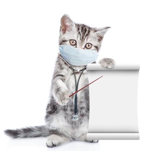 病気を指導する子猫