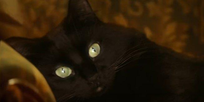 アウル・キティのアップ