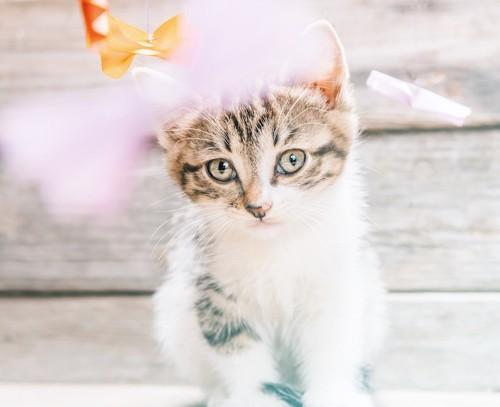 儚げな表情の仔猫