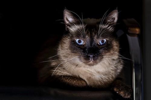 暗闇に光る猫