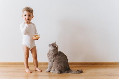 子供のおやつに興味を示す猫