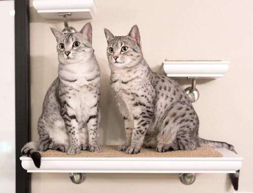 眺める猫達