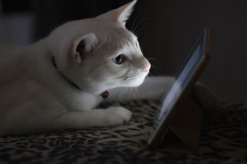 リサーチする猫