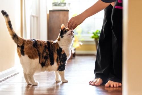 人の手の匂いを嗅ぐ猫