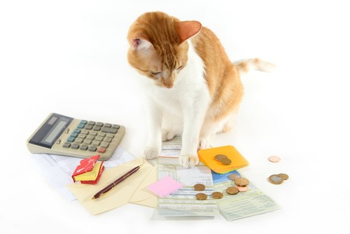 お金と電卓を見つめる子猫