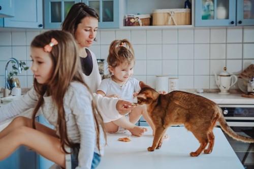 キッチンにいる家族と猫