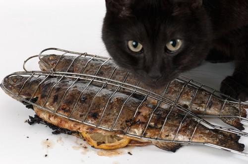 焼き魚を狙っている猫