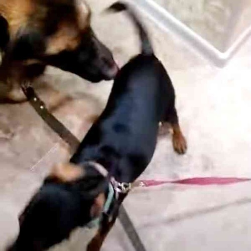 散歩を喜ぶ犬たち