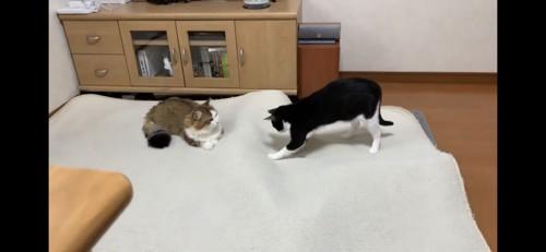 子猫たちを探す