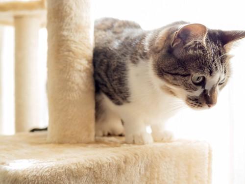 キャットタワーから覗く猫
