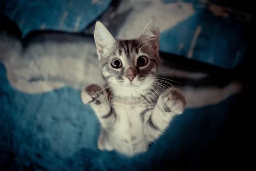 飛びつこうとする猫