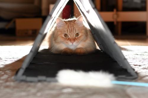 三角のトンネルにいる猫