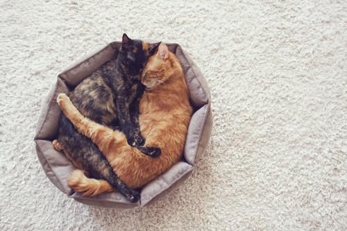 一つのベッドでくっついて眠る二匹の猫