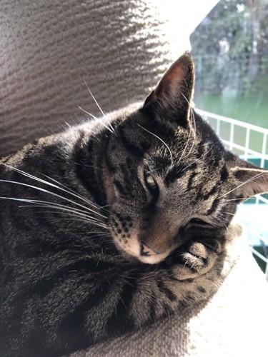 グラビアアイドルのような流し目をする猫