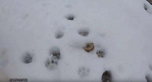 雪の上に残る猫の足あと