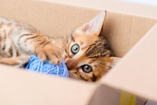 ダンボールの中で毛糸玉を抱える子猫