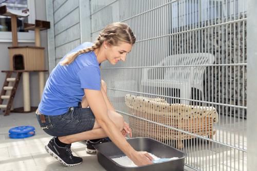 猫用トイレの掃除をする女性
