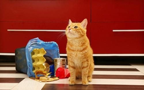 ゴミ箱を荒らす猫
