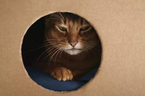 丸い窓の空いたダンボールの中にいる猫
