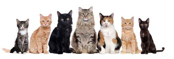 色々な種類の子猫たち