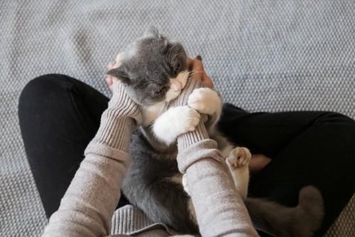 手にじゃれつく膝の上の猫