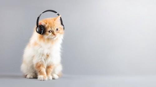 ヘッドフォンをつけて座る猫