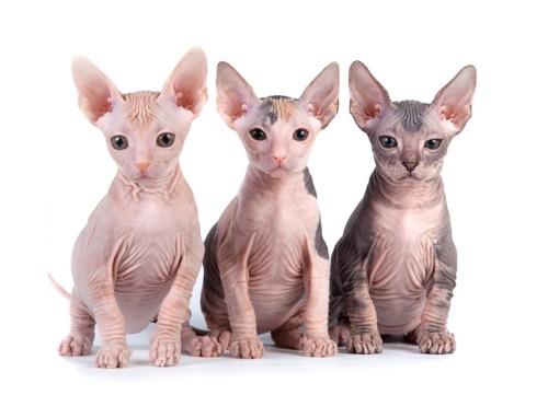 並んで座る三匹のスフィンクス