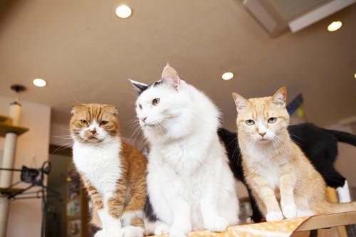 室内の猫たち
