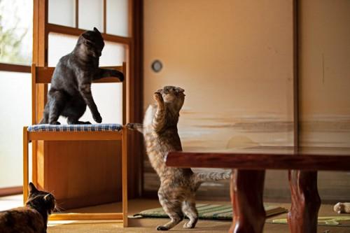 椅子を取り合う二匹の猫