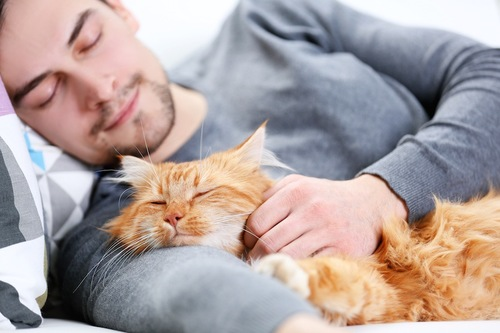 一緒に寝る猫と男性