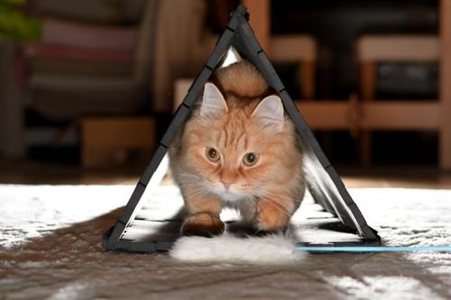 トンネルの中でじゃらしを狙う猫