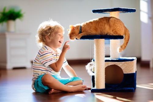 キャットタワーの上の猫に手を伸ばす子供