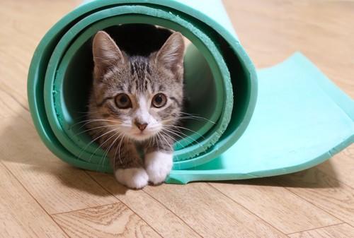 丸まったマットに入る猫