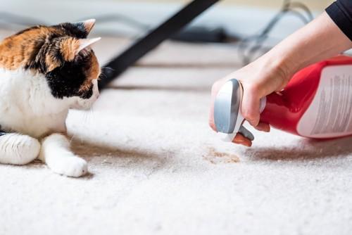 消臭剤をカーペットにかける人と猫