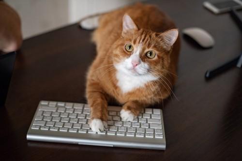 キーボードに乗る猫