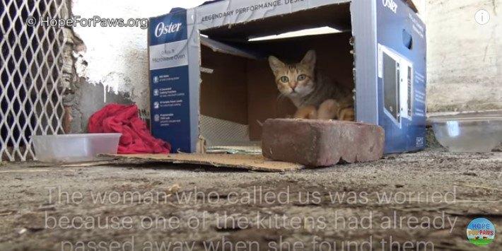 段ボール箱の中の猫親子