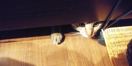 ベッドの下に隠れた猫