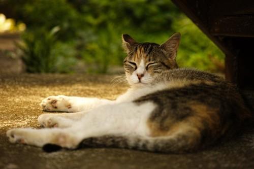 寝起きの猫