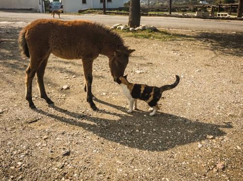 小さな馬に顔をスリスリする三毛猫