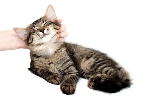 撫でられている子猫
