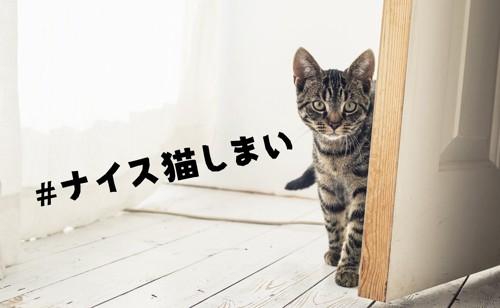 ナイス猫しまい
