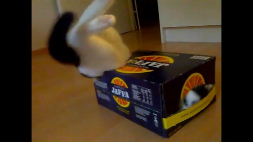 奮闘する猫