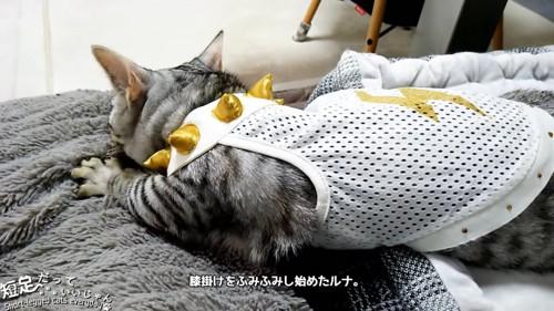 ひざ掛けをフミフミする猫
