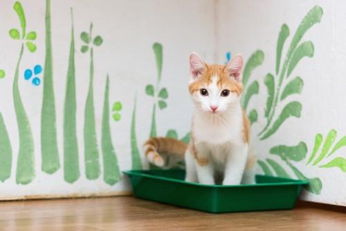 猫用のトイレに入る子猫