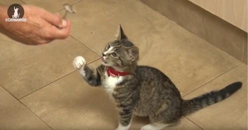 前足でスプーンを取ろうとする猫