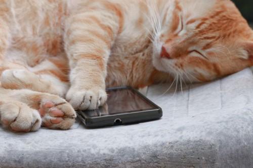 携帯に足を乗せて寝る猫